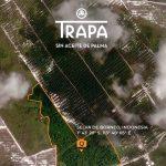 """TRAPA salva parte de una selva de Borneocon """"¿Una fotografía irrepetible?"""""""