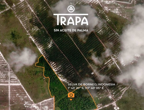 TRAPA, salva, selva ,Borneo, fotografía irrepetible,