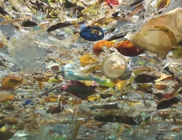 isla de plastico, programapublicidad