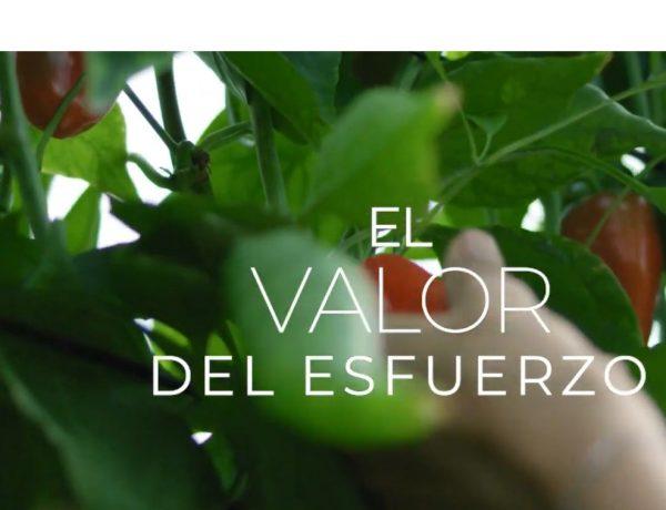 #ElValorDelEsfuerzo, tactics, cooperativas, Agro-alimentarias ,Andalucía,programapublicidad