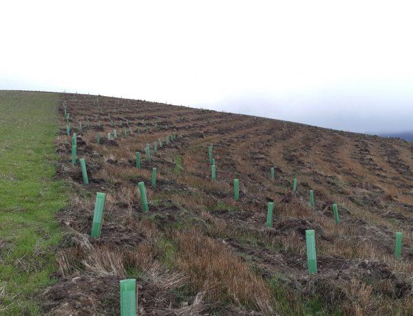 P&G , Reforest'Action ,10.000 árboles , incendios , Castilla y Leónprogramapublicidad
